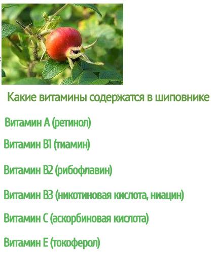Витамины в шиповнике