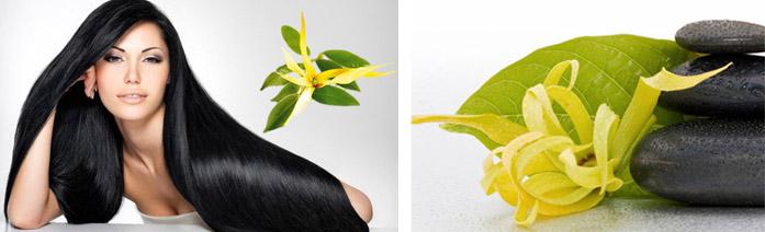Эффективность растения иланг-иланг