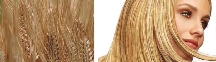 Пшеничные оттенки волос