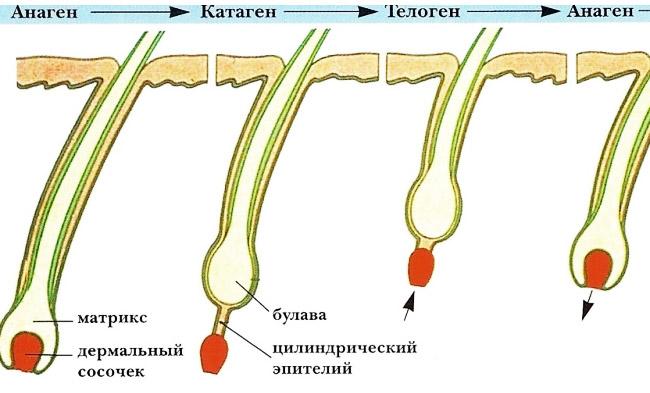 Как растут ресницы после наращивания