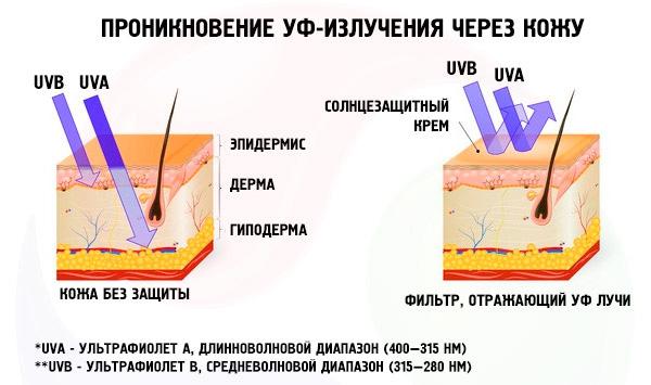 Проникновение УФ-лучей в кожу