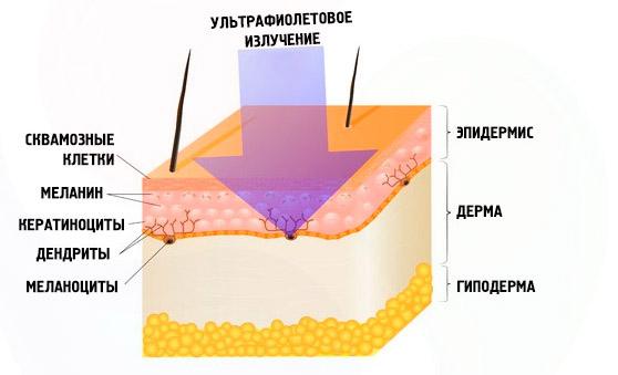 Воздействие солнца на кожу