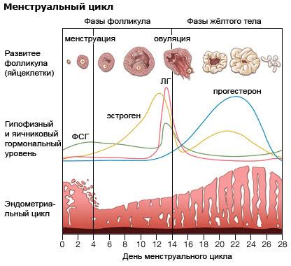 Изменения гормонального фона