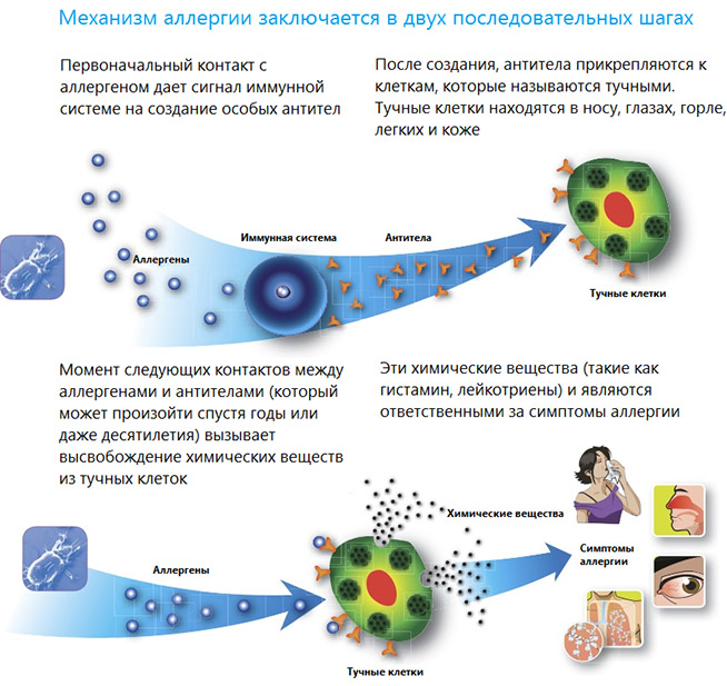 Симптомы аллергии у взрослых на коже
