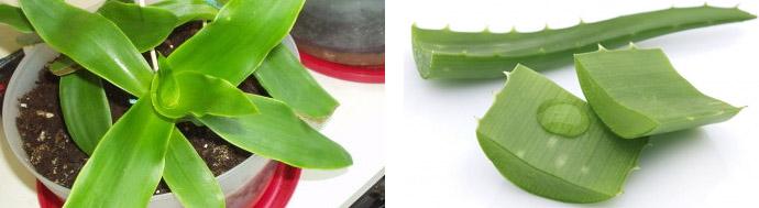 Растения от жировиков