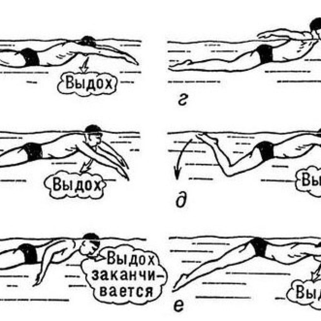 Техника плавания брасом