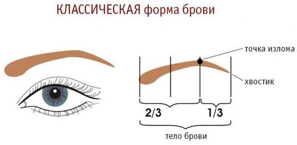 Классическая форма брови