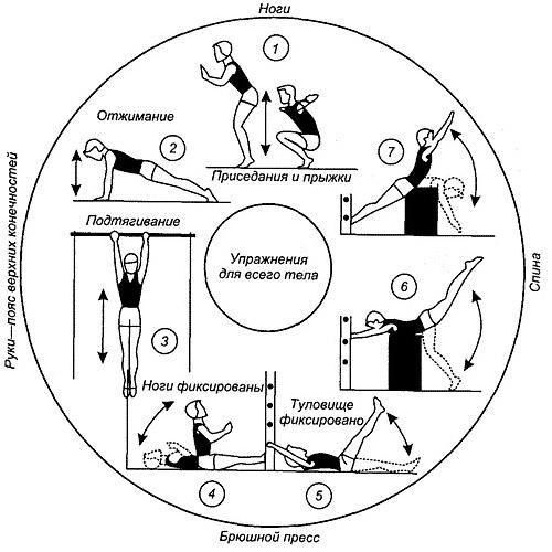 Пример круговой тренировки